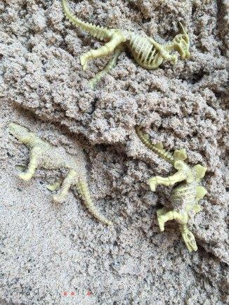 dino-fossil-search